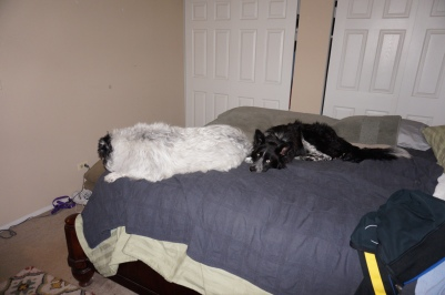 Two BC's on the king-size bed.  Just don't get in Cody's grill.