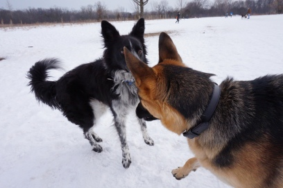 This is me testing ACE to see if he was interested in playing.