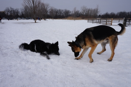Ace and me taking a snow eating break.