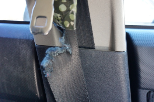 My Dad's seatbelt in the Scion xB.  He was not in the Scion when I did this.