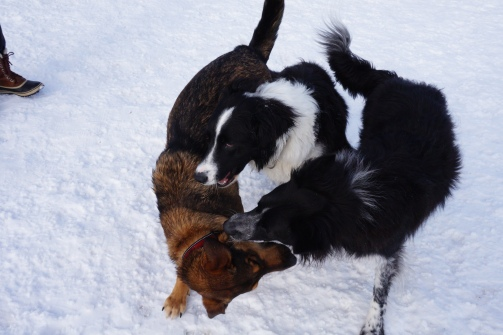 Kip and I had discussed how we could double-team other dogs...we were just playing.
