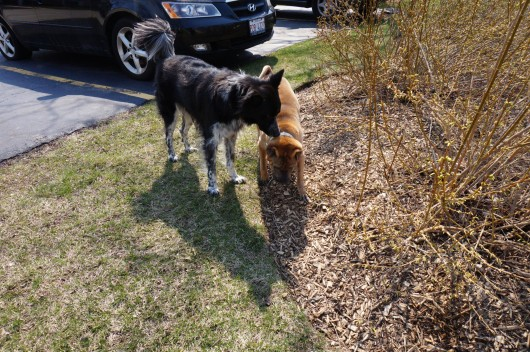 "Some ""push-and-sniff"" action showed Bob that I was a friend, that I did not want to hurt him."