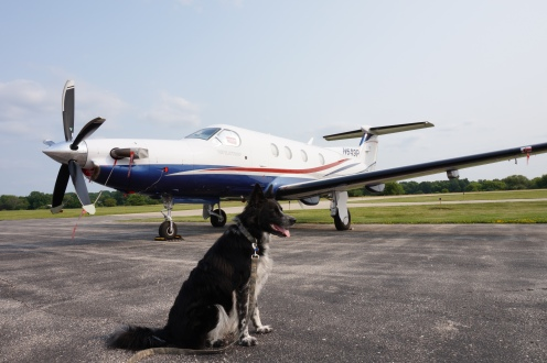The airport was cool, and no one seemed to mind a well-behaved Border collie walking the flightline.  In the background is a Pilatus PC-12, built in Switzerland.