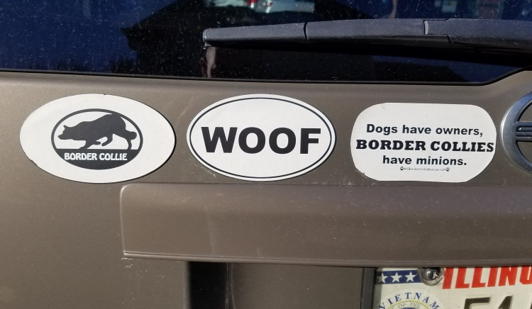 Scion Border collie mags