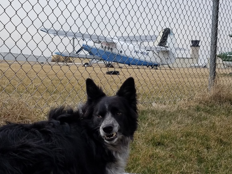WRIGLEY FIELD -and- BORDER COLLIE EXPLOITS WITH THE POINTY